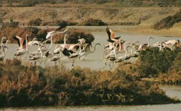 parque natural bahia de cadiz